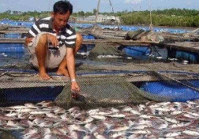 Người nuôi cá trắng tay vì ô nhiễm