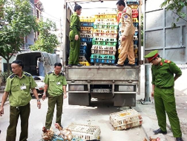 Không có chuyện gà đầu trọc tràn lan tại Hà Nội
