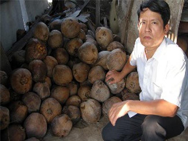 Dừa đạt mức giá cao kỷ lục