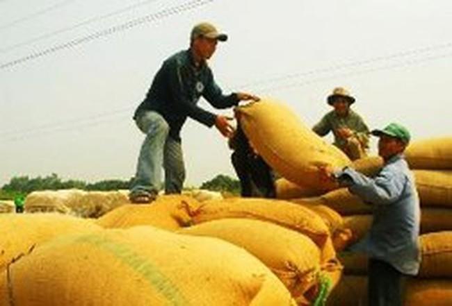 """""""Thu mua lúa gạo làm lợi cho doanh nghiệp, không phải nông dân"""""""