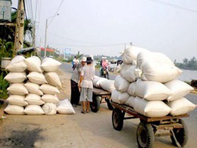 Giá gạo thấp nhất thế giới vẫn cứ ế?