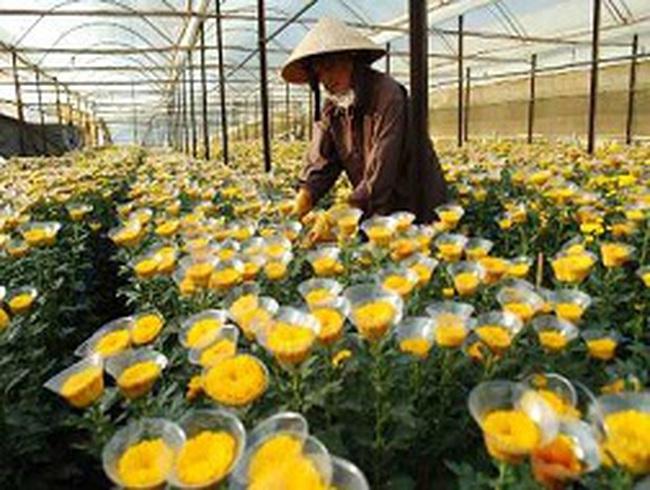 Vướng thủ tục kiểm dịch, xuất nhập khẩu hoa gặp khó