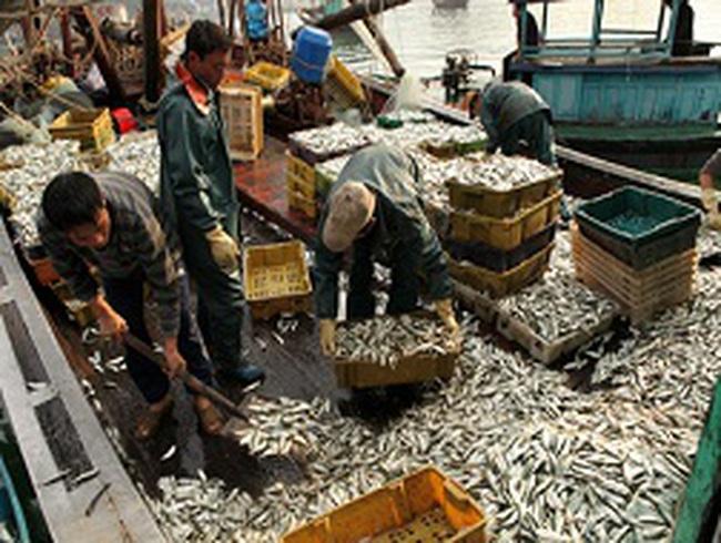 Nguyên liệu cho nhà máy thủy sản bị thiếu