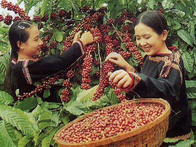 Đã xuất khẩu khoảng 133.000 tấn cà phê trong tháng 4