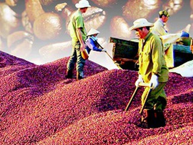 Cà phê Việt: Doanh nghiệp nội ngậm đắng