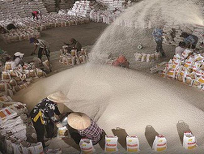 Thương nhân xuất khẩu gạo: Phải có vùng nguyên liệu?