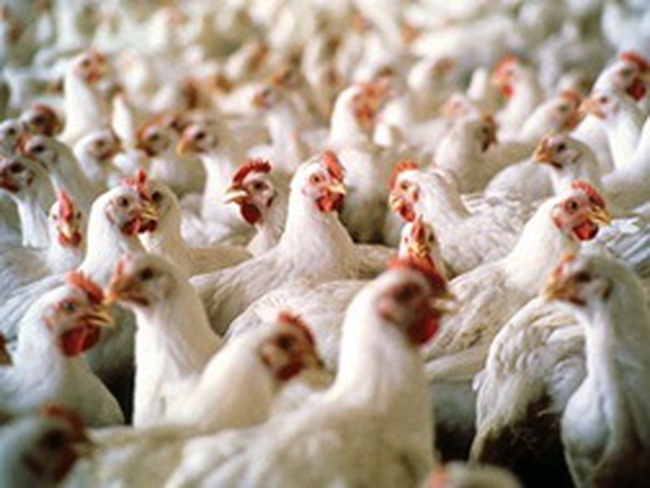 Trung Quốc quyết định cấm nhập khẩu gia cầm từ Mỹ