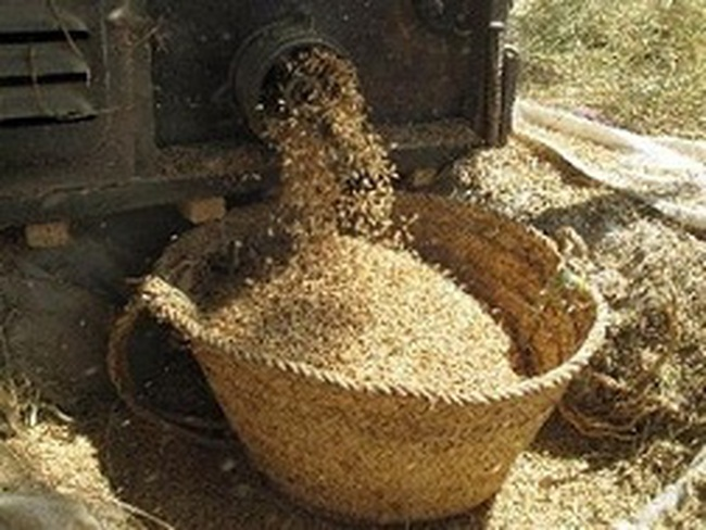 FAO: Giá lương thực toàn cầu có thể tiếp tục giảm