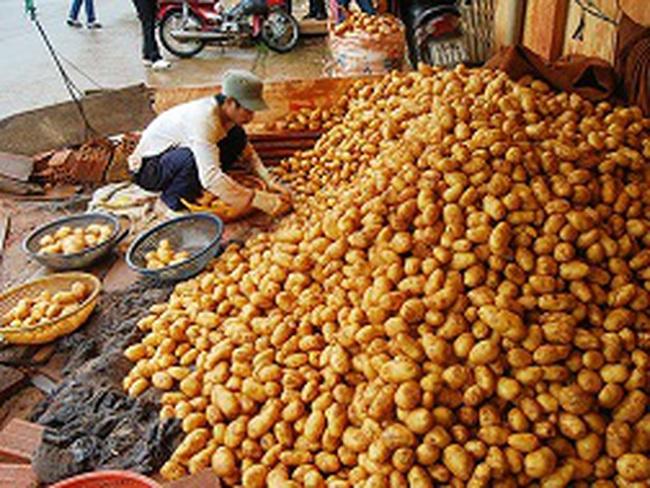 Nông sản Trung Quốc ngập chợ Việt: Bảo hộ nông sản bằng hàng rào kỹ thuật