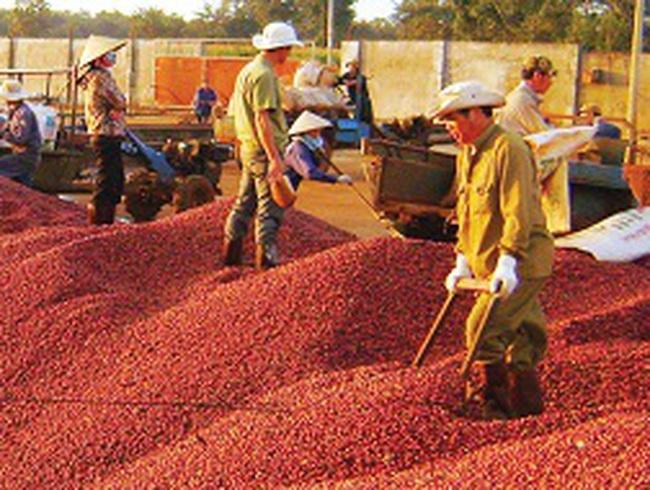 Những hạn chế trong xuất khẩu cà phê
