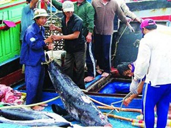 """Xuất khẩu cá ngừ gặp khó vì """"đói"""" nguyên liệu"""