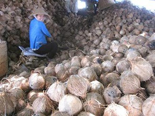 Dừa khô nguyên liệu phục hồi giá