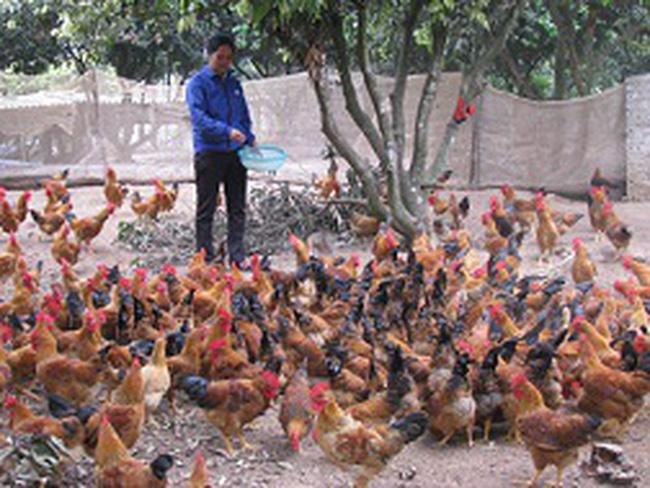 Loạn giống gà ở Yên Thế