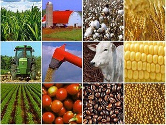 Dồn lực cho nông sản giá trị cao