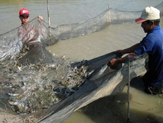 Thiếu vùng nguyên liệu, doanh nghiệp thủy sản thiệt thòi