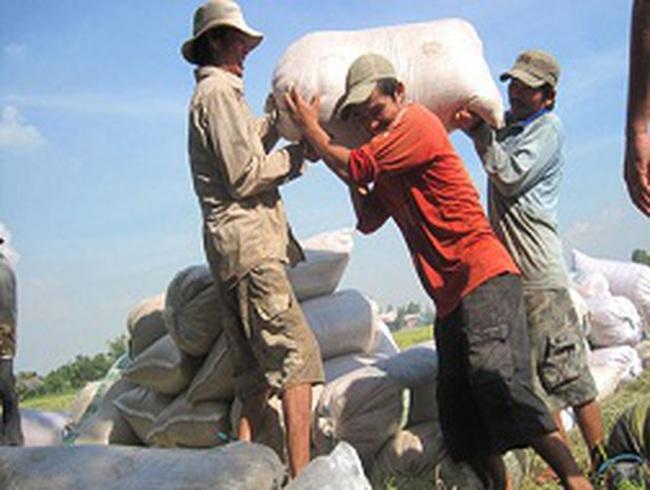 Cứu giá lúa bằng xuất gạo tiểu ngạch