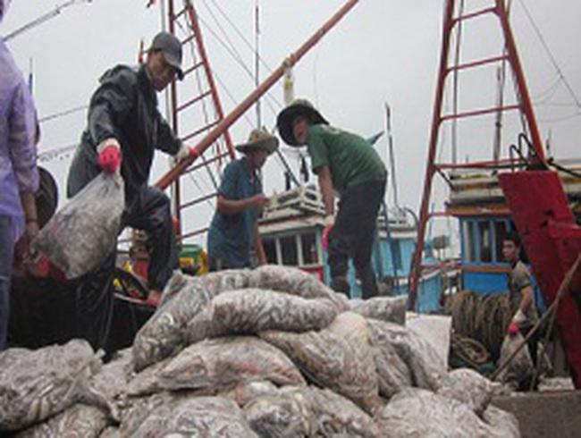 Ngư dân hối hả bán cá chạy bão