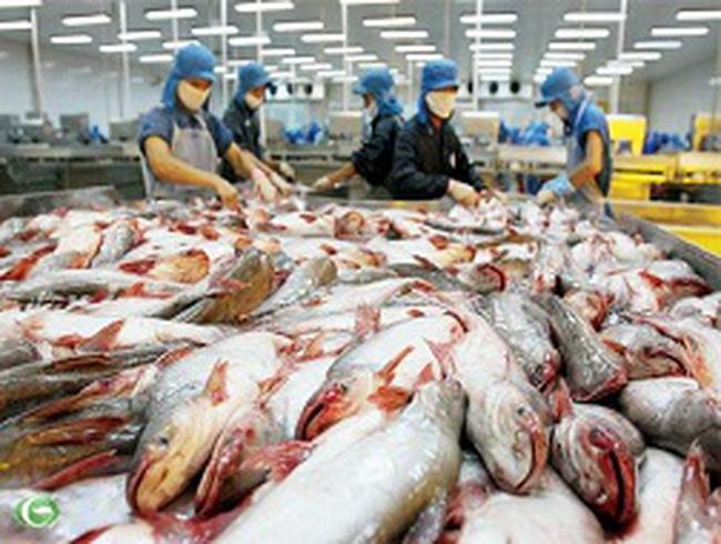 """""""Đói"""" cá tra giữa mùa xuất khẩu"""