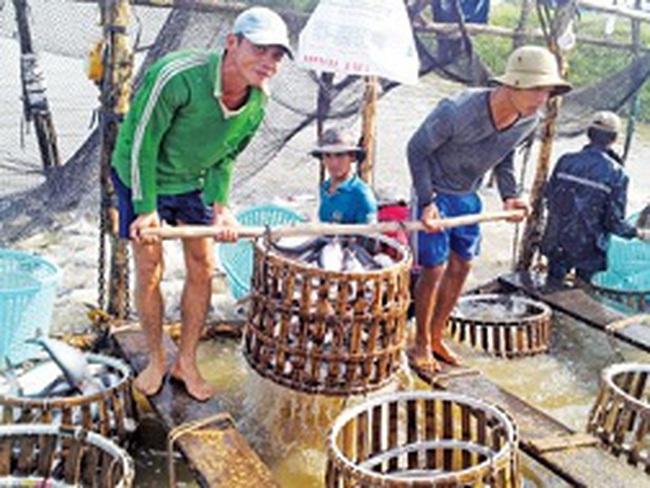 'Vỡ trận' ngành cá tra