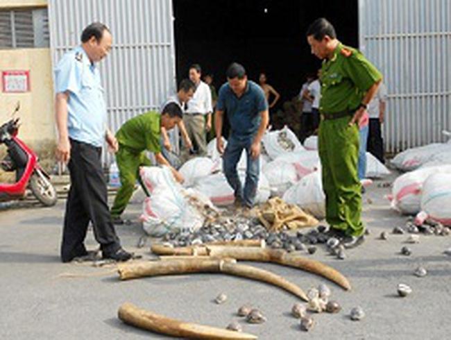 Gần 2 tấn ngà voi nhập lậu qua cảng Hải Phòng
