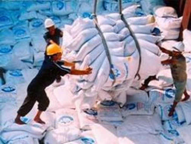 Triển khai Quy hoạch thương nhân kinh doanh xuất khẩu gạo
