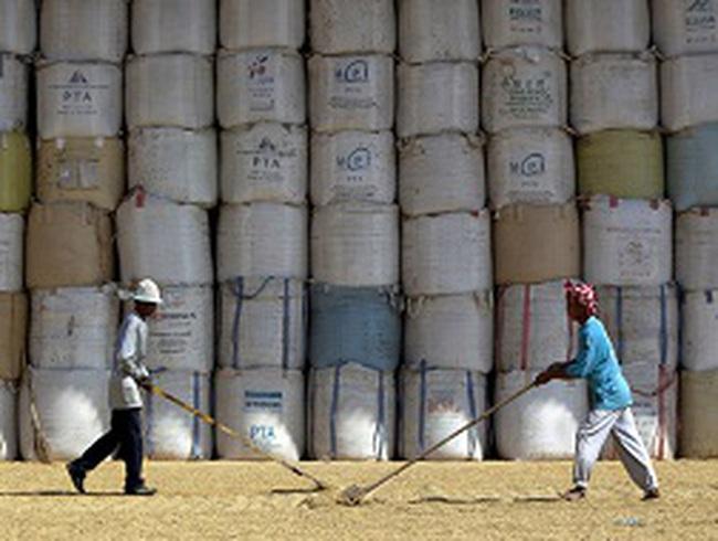 Thái Lan có thể lỗ 15 tỷ USD với chính sách lúa gạo