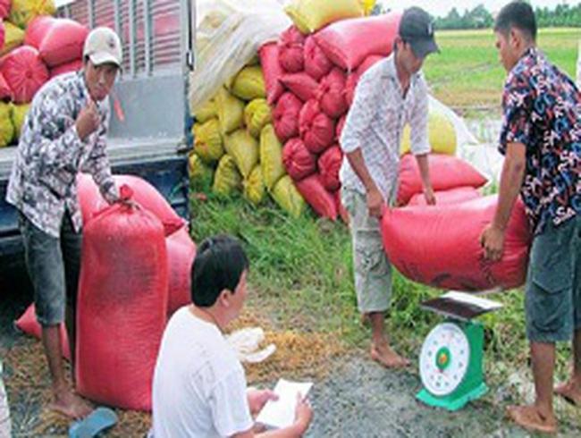 Thị trường lúa gạo đang ở thế độc quyền?