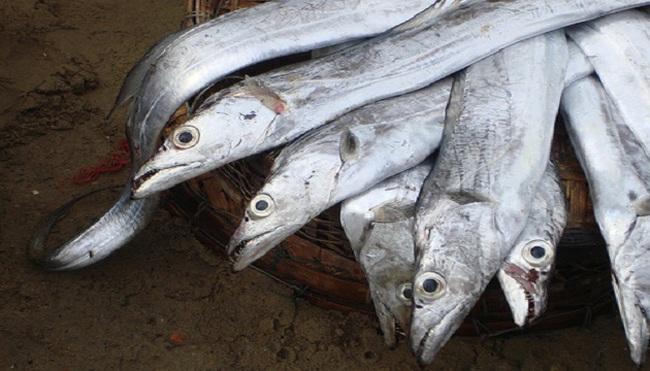 Trúng đậm cá hố, ngư dân thu lời hàng chục tỉ đồng