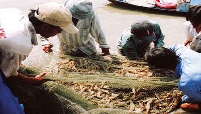 Xuất khẩu thủy sản: Đắt hàng, nhưng lo