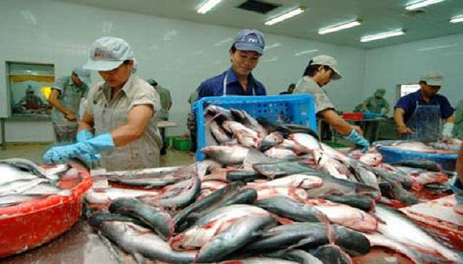 Thiết lập Trung tâm phân phối cá tra tại châu Âu: Đường đến còn xa