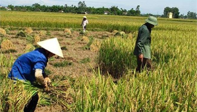 Nông dân túc trực ngưỡng nghèo