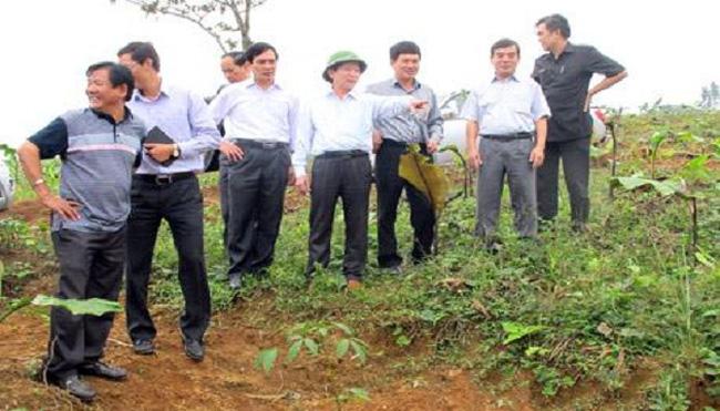 Nghệ An: Cho trồng mới hơn 3.000ha cao su