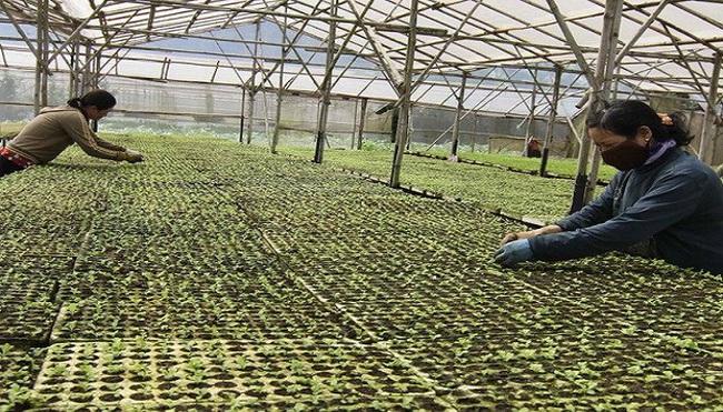 Nông sản an toàn:Cần phát triển cả nội địa và xuất khẩu