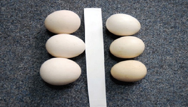 Cẩn thận mua phải trứng gà ta giả