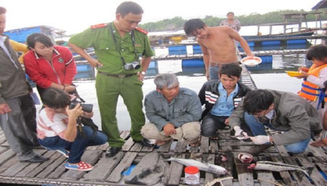 Cá nuôi lồng bè chết hàng loạt vì sông bị ô nhiễm