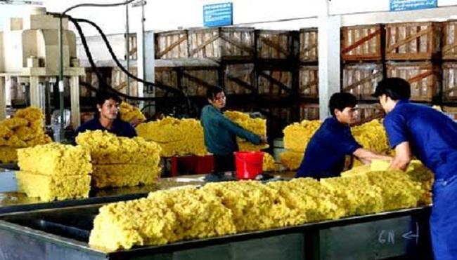 Thị trường xuất khẩu cao su tiếp tục gặp khó