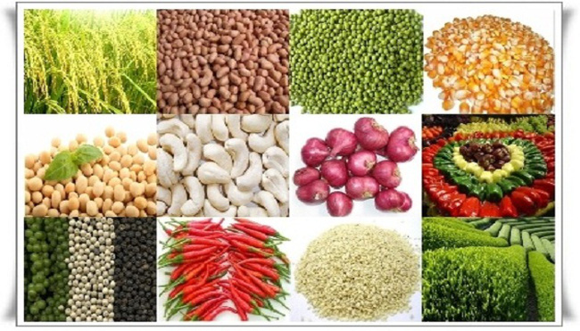 Nông sản Việt chịu áp lực gì trước các hiệp định thương mại?