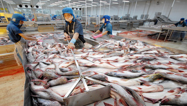 Cứu ngành cá tra: Dẹp loạn đầu mối xuất khẩu
