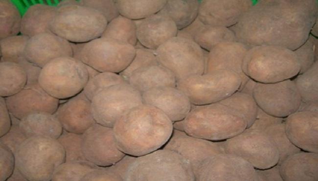 """Bức xúc khoai tây Trung Quốc """"đội lốt"""" Đà Lạt"""