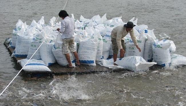 Kiến nghị sản xuất thức ăn cá tra tại chỗ
