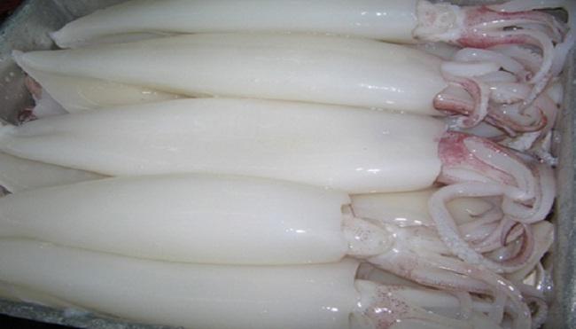 Thiếu mực, bạch tuộc để chế biến xuất khẩu