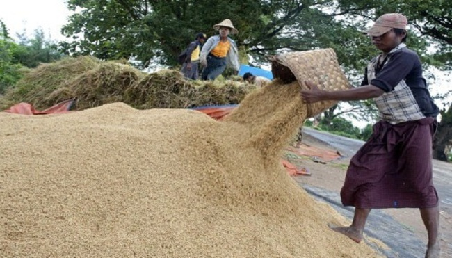 Gỡ nút thắt lúa gạo
