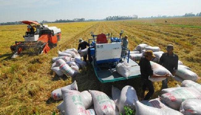 Tung chiêu kêu khổ, thu mua tạm trữ gạo được rót tiền
