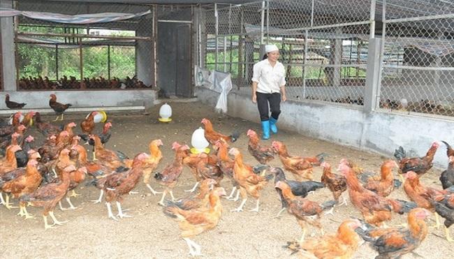 Giá nông sản từ đồng tới chợ: Phí trung gian quá lớn