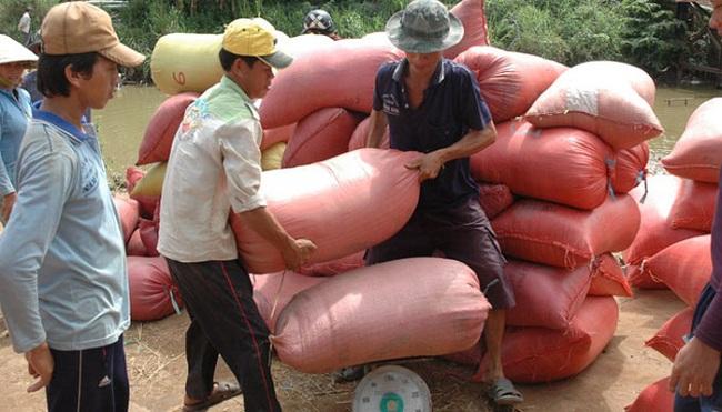 Chương trình mua lúa tạm trữ: Nông dân chờ, doanh nghiệp chưa vội