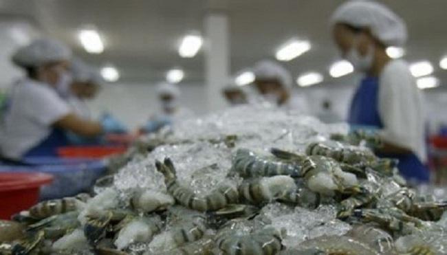 Mỹ áp thuế chống bán phá giá trở lại tôm Việt Nam