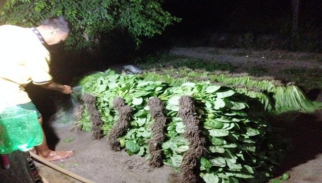 Rau bẩn từ vườn đến bàn ăn: Không dám ăn rau mình trồng