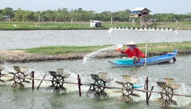 Việt Nam cần sớm quy hoạch nghề nuôi tôm