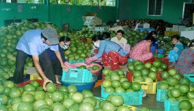 Thiếu liên kết trong tiêu thụ trái cây ĐBSCL