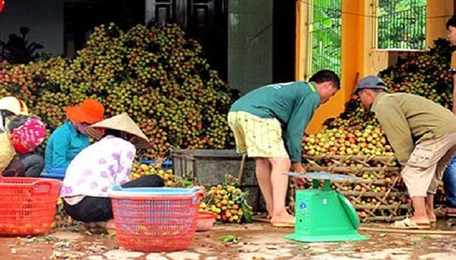 Trái cây Việt thoát cảnh giá bèo